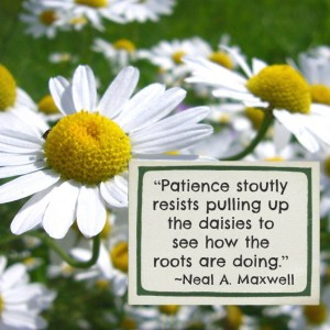 """Patience stoutly resists pulling up the daisies to see how the roots are doing."" - Neal A. Maxwell"
