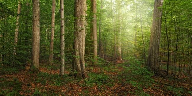 The Sacred Grove by Robert A Boyd
