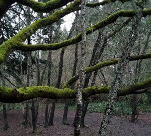 Woodmansee Park Trees Axis 2